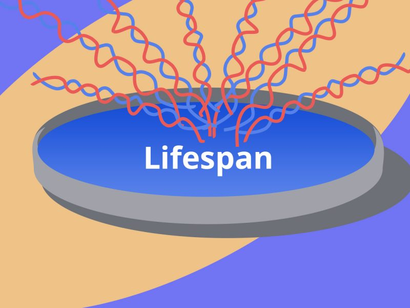 lifespan summary